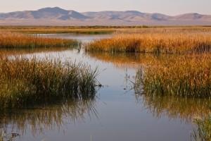 Stillwater NWR